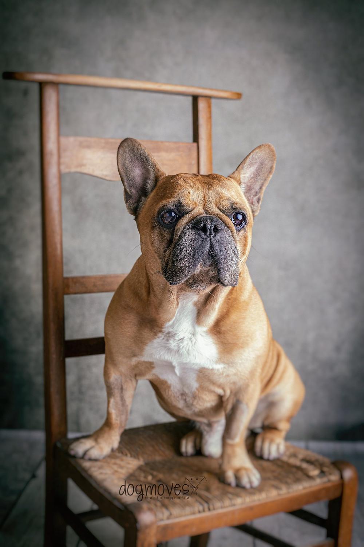 Hunde Tierfotografie Mannheim