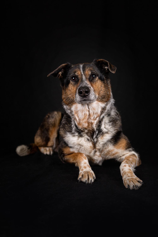 Hund Shooting Foto mit Hund mannheim
