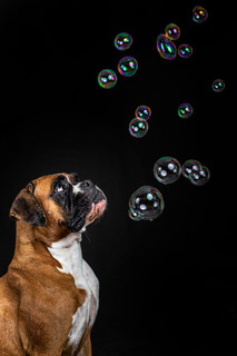 Dogs and Bubbles