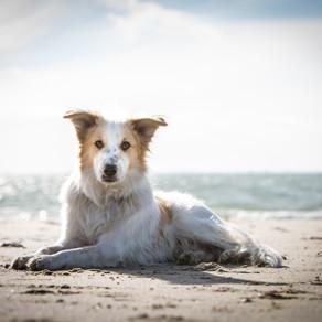 Fotos mit Hund  am Strand von Zoutelande