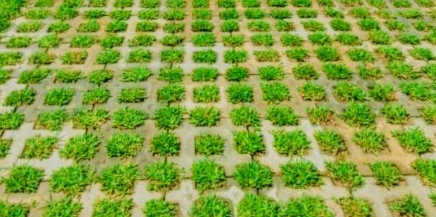 green block bloque grilla garden block.jpg