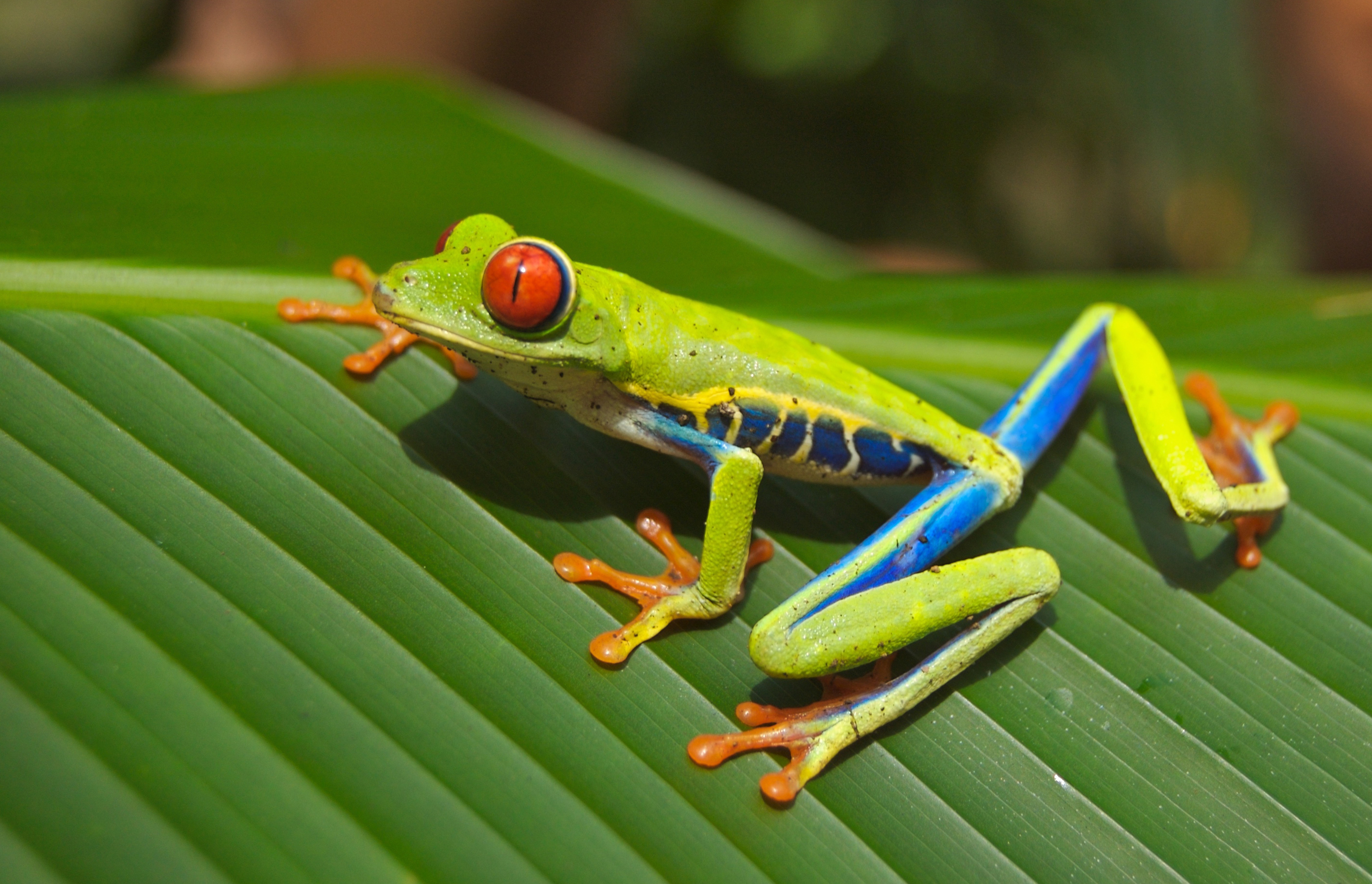 CIRCUIT COSTA-RICA