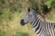 AFRIQUE DU SUD Photo south-africa-163052