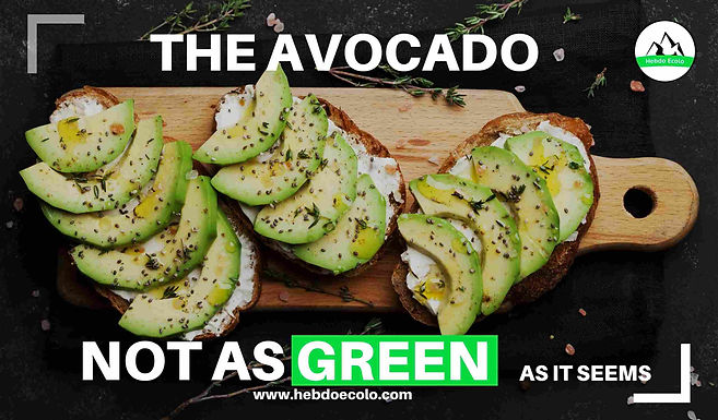 The avocado: not as green as it seems