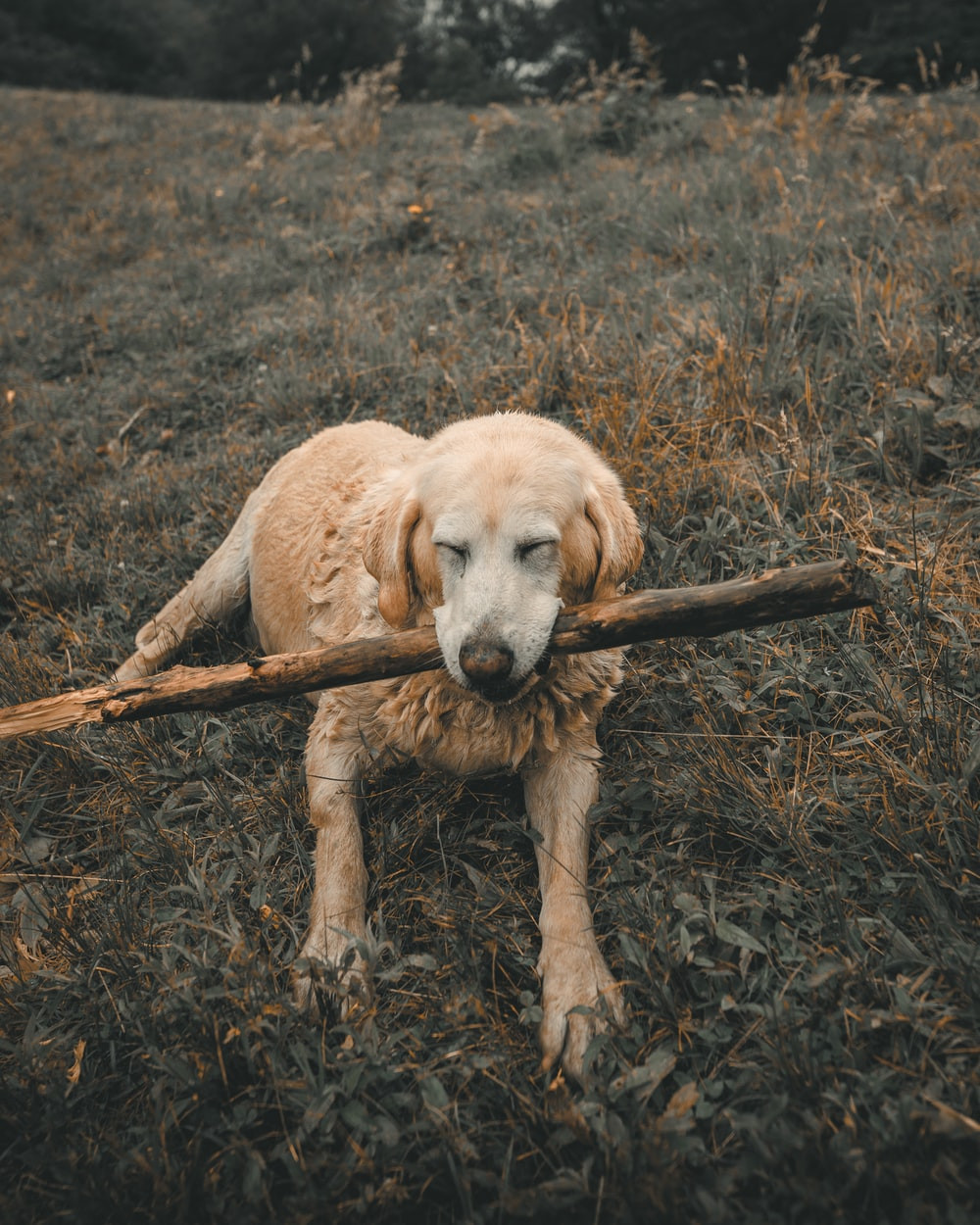 Dog plays with stick