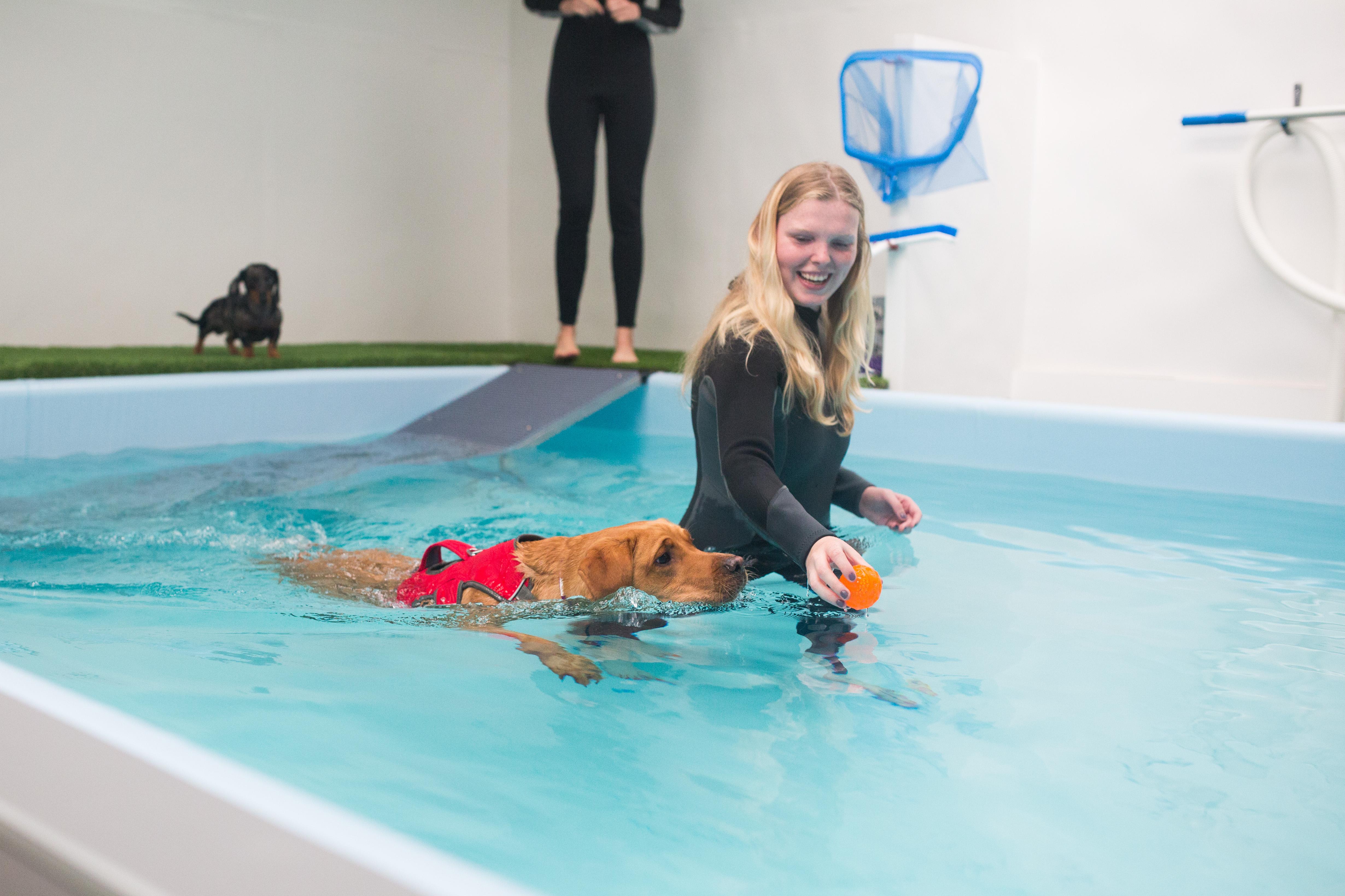Lichfield Dog Hydrotherapy -5