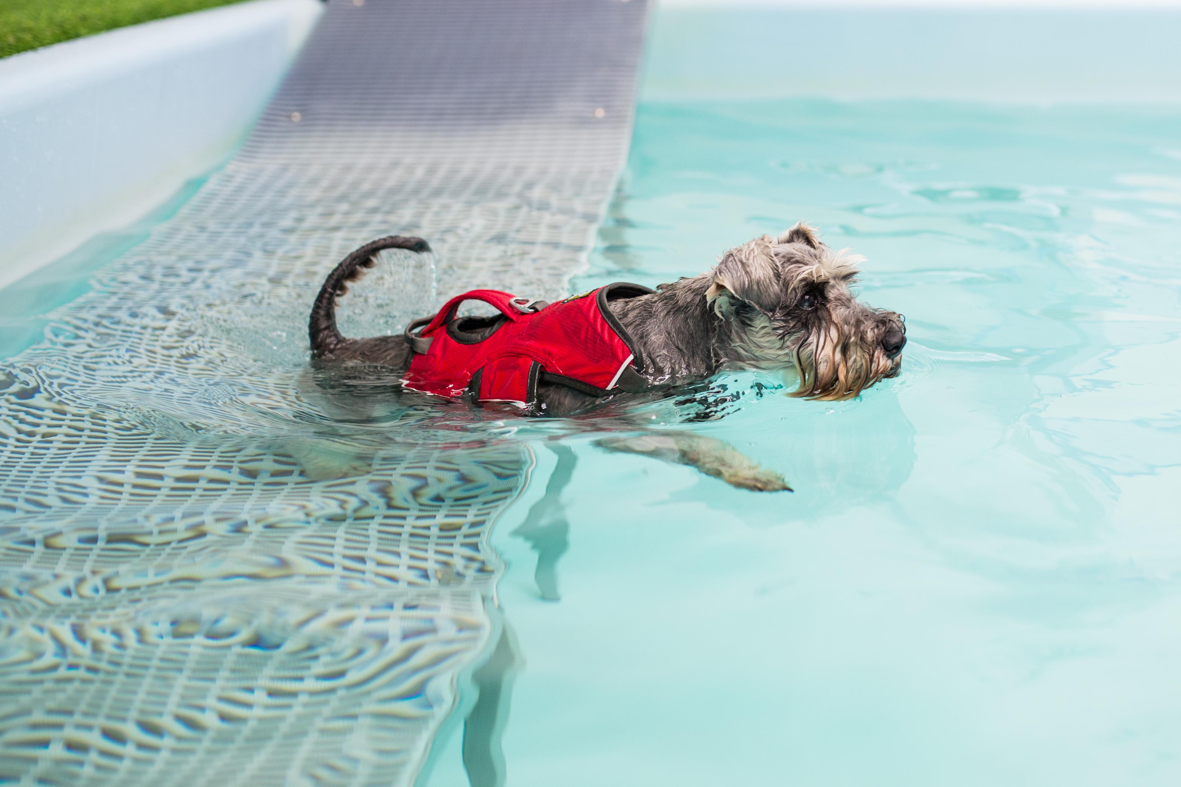 Lichfield Dog Hydrotherapy