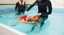 Why Your Dog Needs Hydrotherapy.