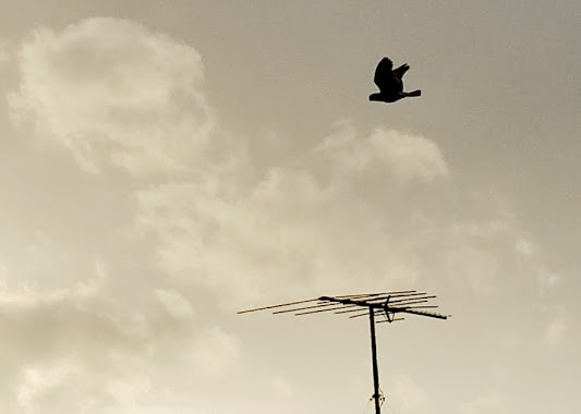 Ether Eagle By AM Graetz