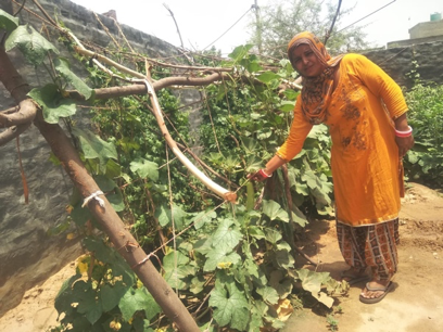 How kitchen gardening increased Nipo's income!
