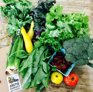 celery, yellow squash, red russian kale, sorrel, green leaf lettuce, broccoli, strawberries, heirloom tomatoes
