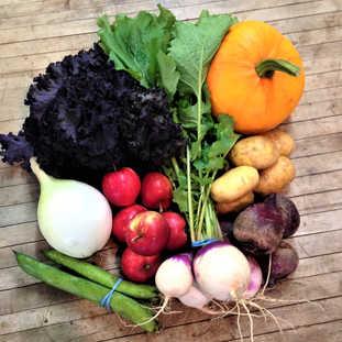 fava beans, onion, purple kale, apples, purple top turnips, beets, yukon gold potatoes, pie pumpkin