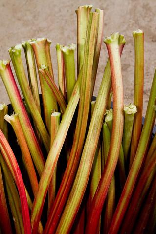 Rhubarb Storage Tips