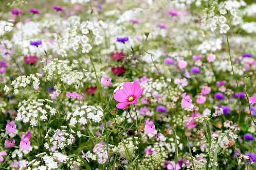 Dreamy Meadow, Flowers Wall Decor