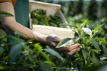 Examining Crops