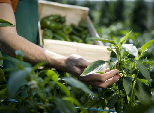 How to farm crops for each season