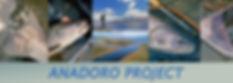 ANADORO-banner.jpg