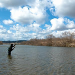 Spring Swing Amemasu Fishing.jpg