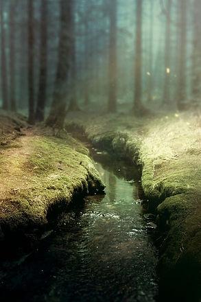 forest-reiki-stefy-joy-holistic.jpg