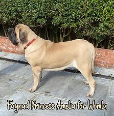 Amelia Stand New.jpeg