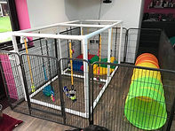 Indoor Play Area1.jpeg