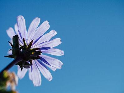 blue-sky-flower-768x577.jpg