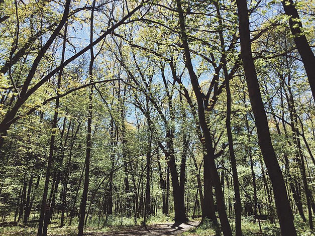 lightgreenforest1.jpg