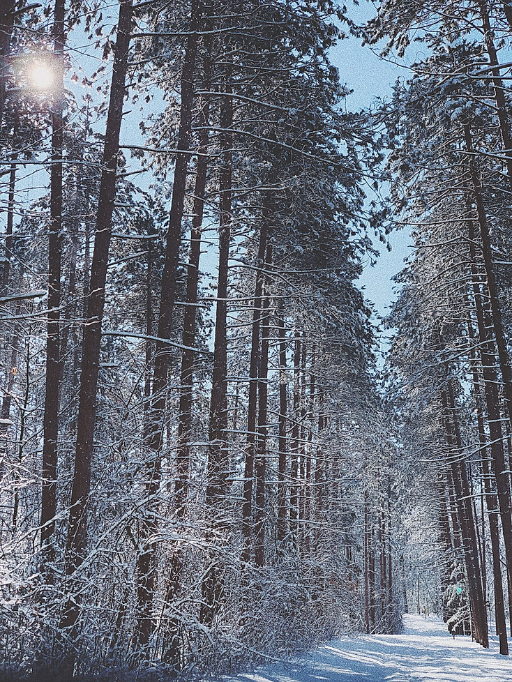 snowypath_.jpg