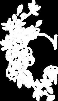 C_white_colour-copy.png