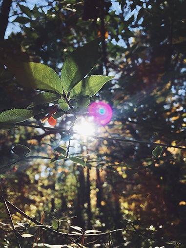 leavespink.jpg