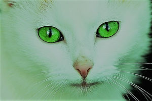 800px-Cat_with_green_eyes.jpg