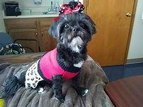 Tammey Yokum Pyle's Dog Khloe.jpg