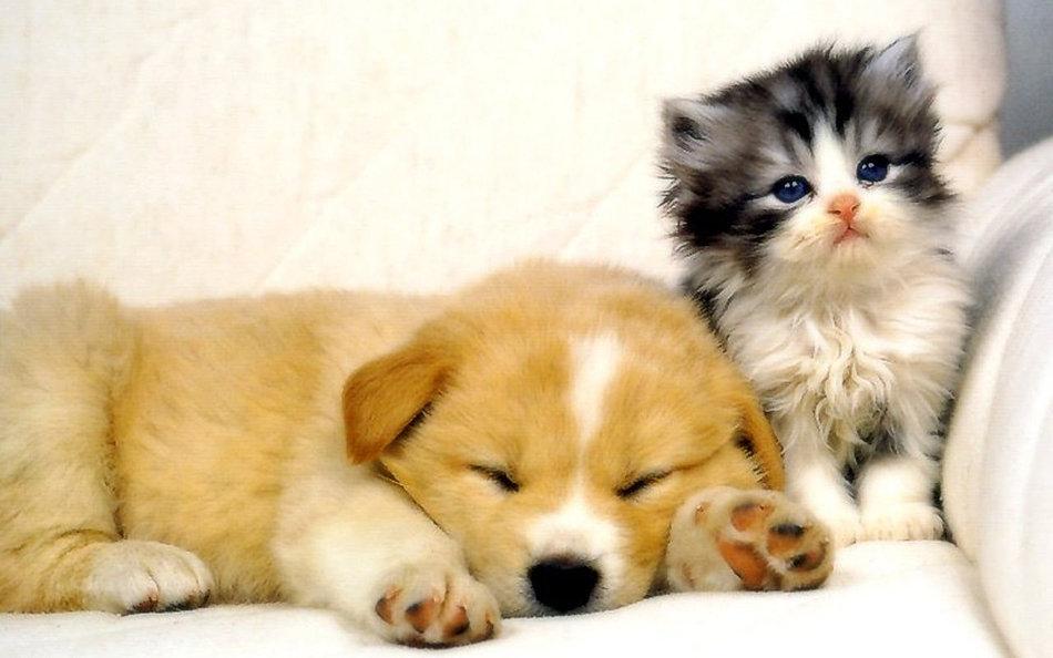 Картинки имя, смешные котята и щенки картинки