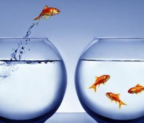 Stabilité VS Changement