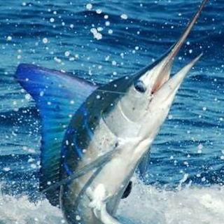 Martinique Billfish Tournament