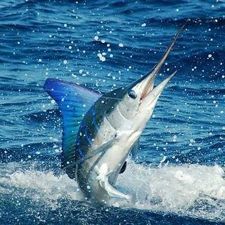 Reel Crazy Tournament Fishing