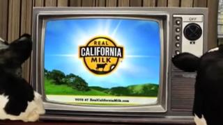 California Cheese - Case Study