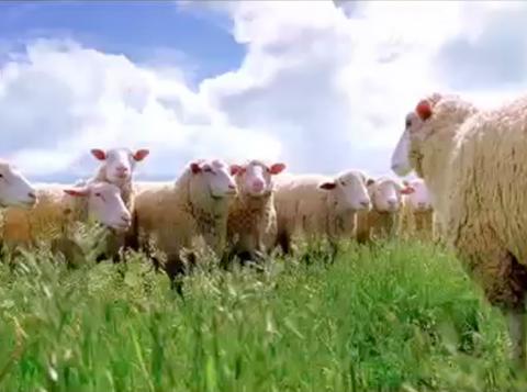 Brand TV - Angry Sheep