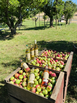 Just picked apples in the orchard