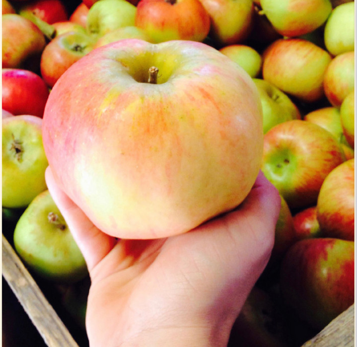 Apple in hand box.jpg