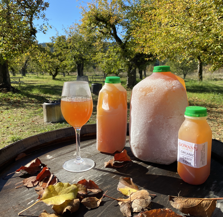 Sweet Frozen Cider orchard .HEIC