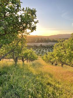 Gowan's Orchard Sunset