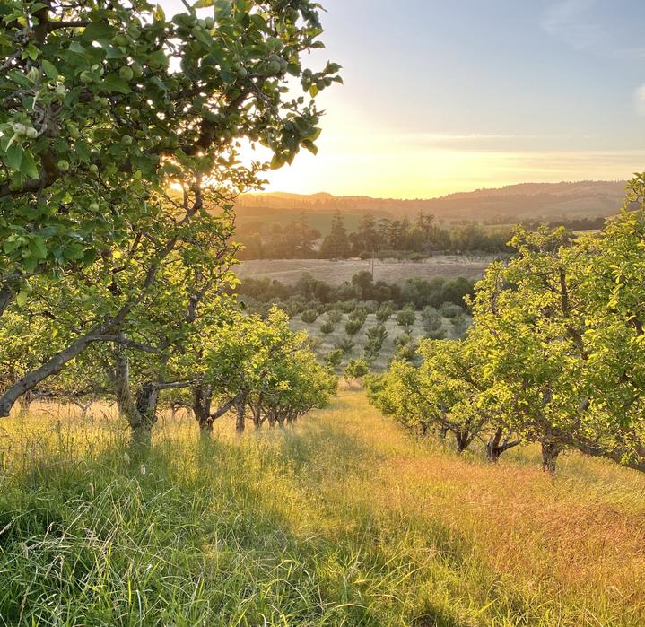 Orchard at dusk MV 2021.heic