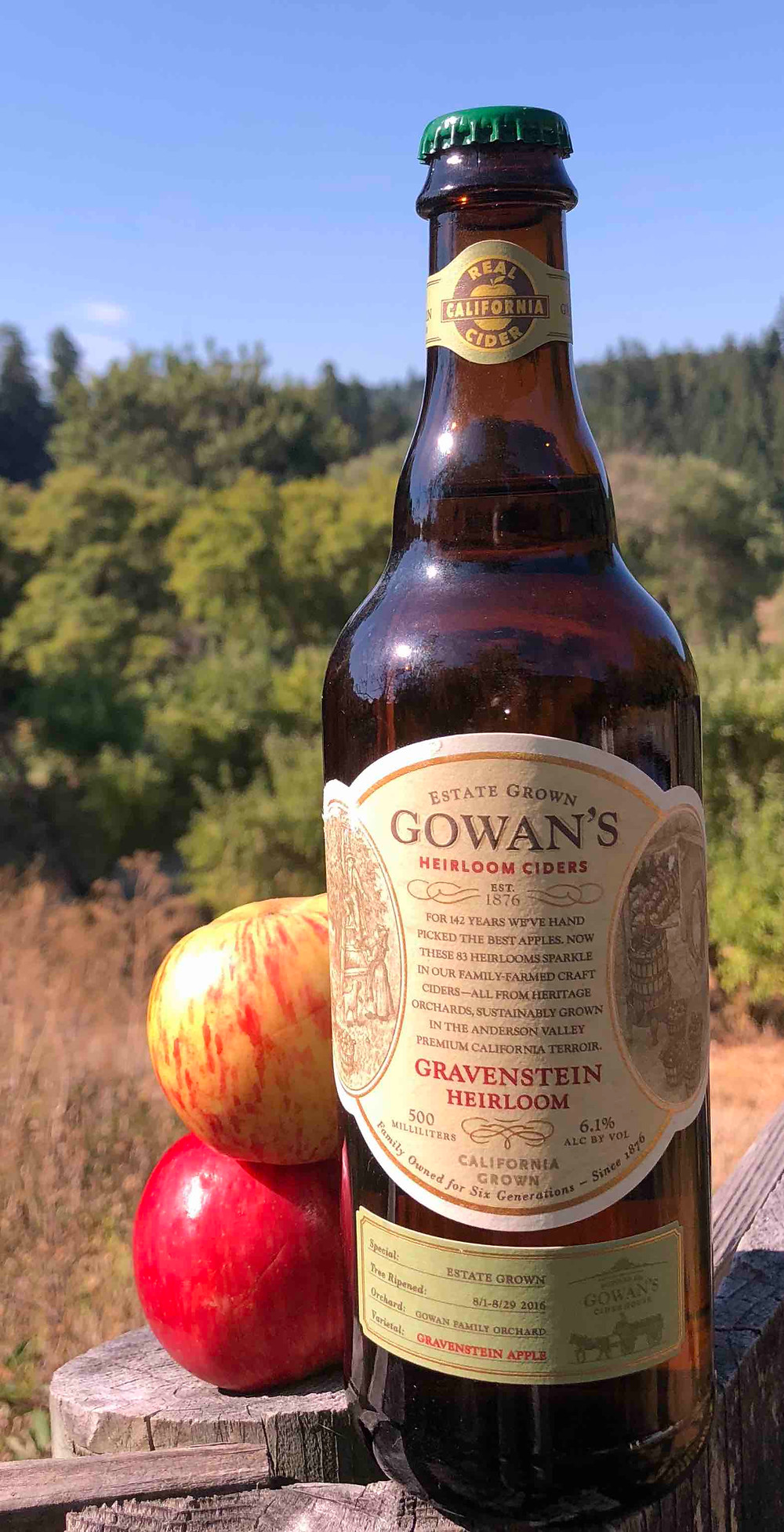 Gowan's Gravenstein Cider and apples in the orchard