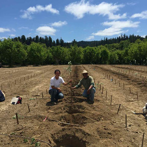 Organic at Gowan's Family Orchards