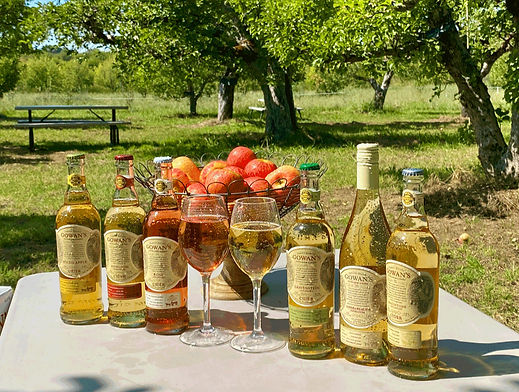 Cider-Table-in-Orchard-200906-1kpng8_edi