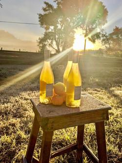 Sunlight Cider Bottles