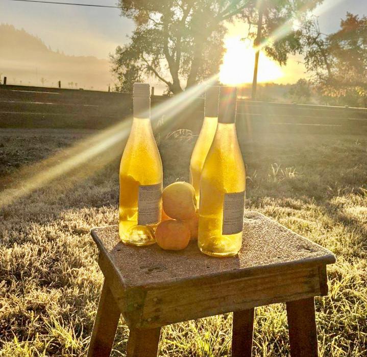 Cider Bottles Sierra Beauty bench.JPEG