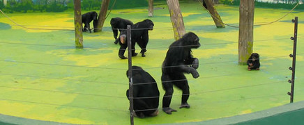 zoo_indefinit2.jpg