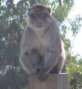 zoo_indefinit1.jpg